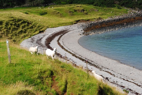 following_sheep_raasay1